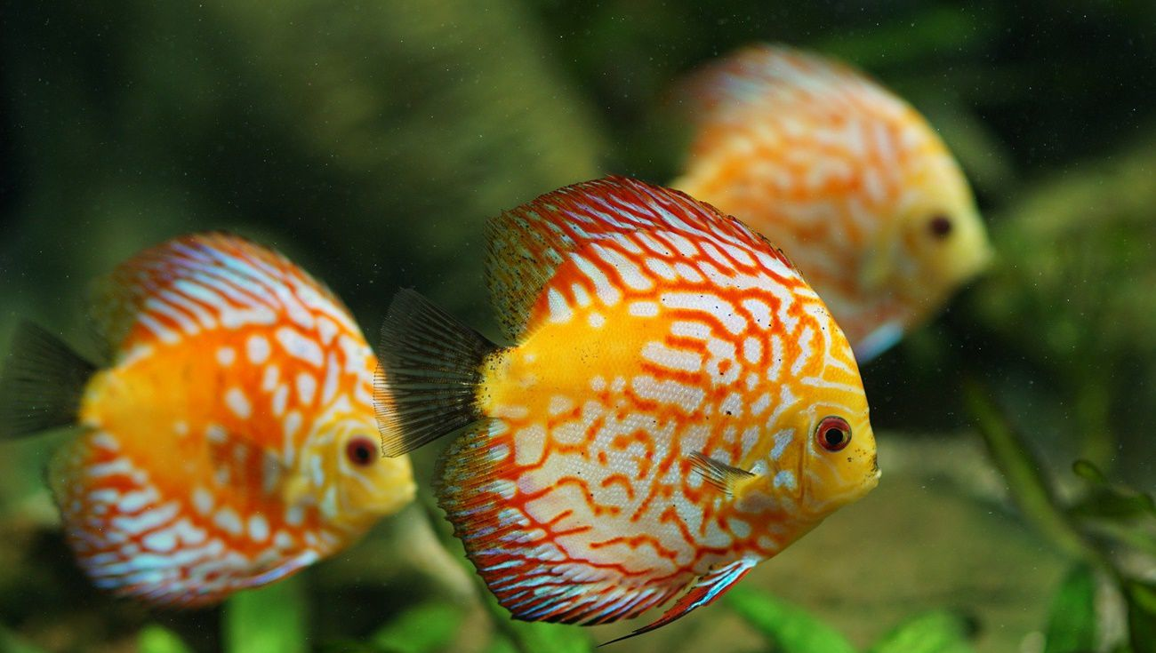 養魚注意事項