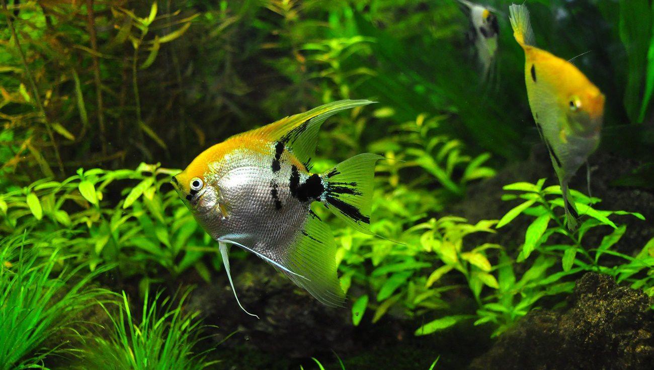 養熱帶魚注意事項