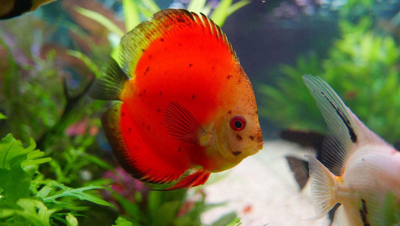 飼養熱帶魚注意事項