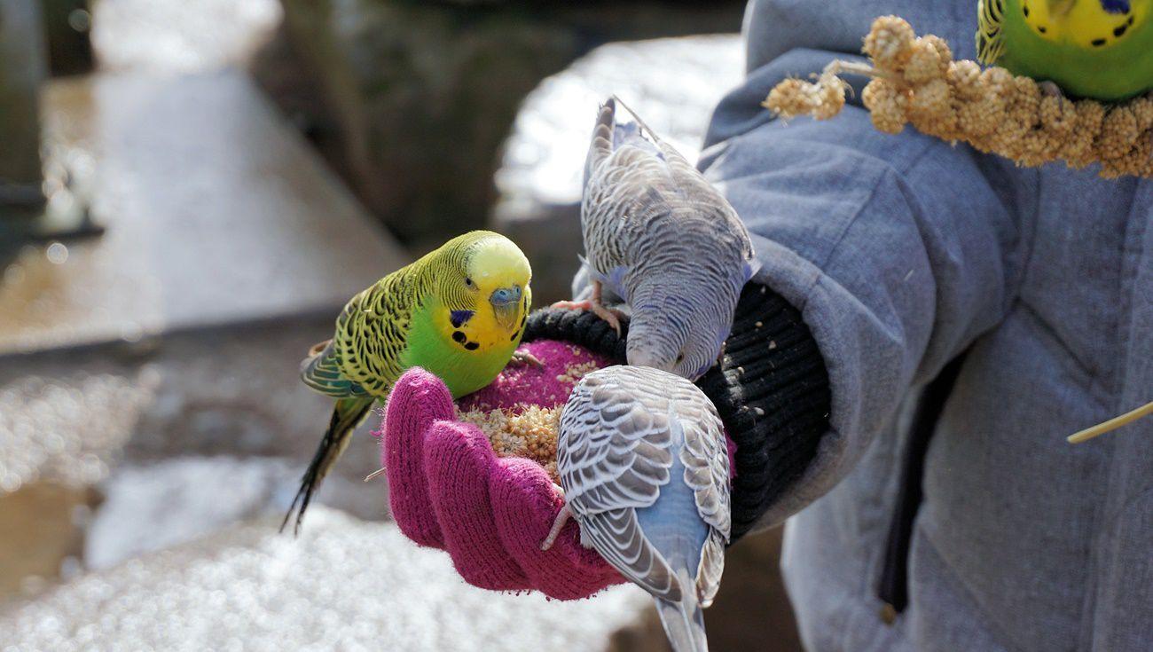 飼養鸚鵡注意事項