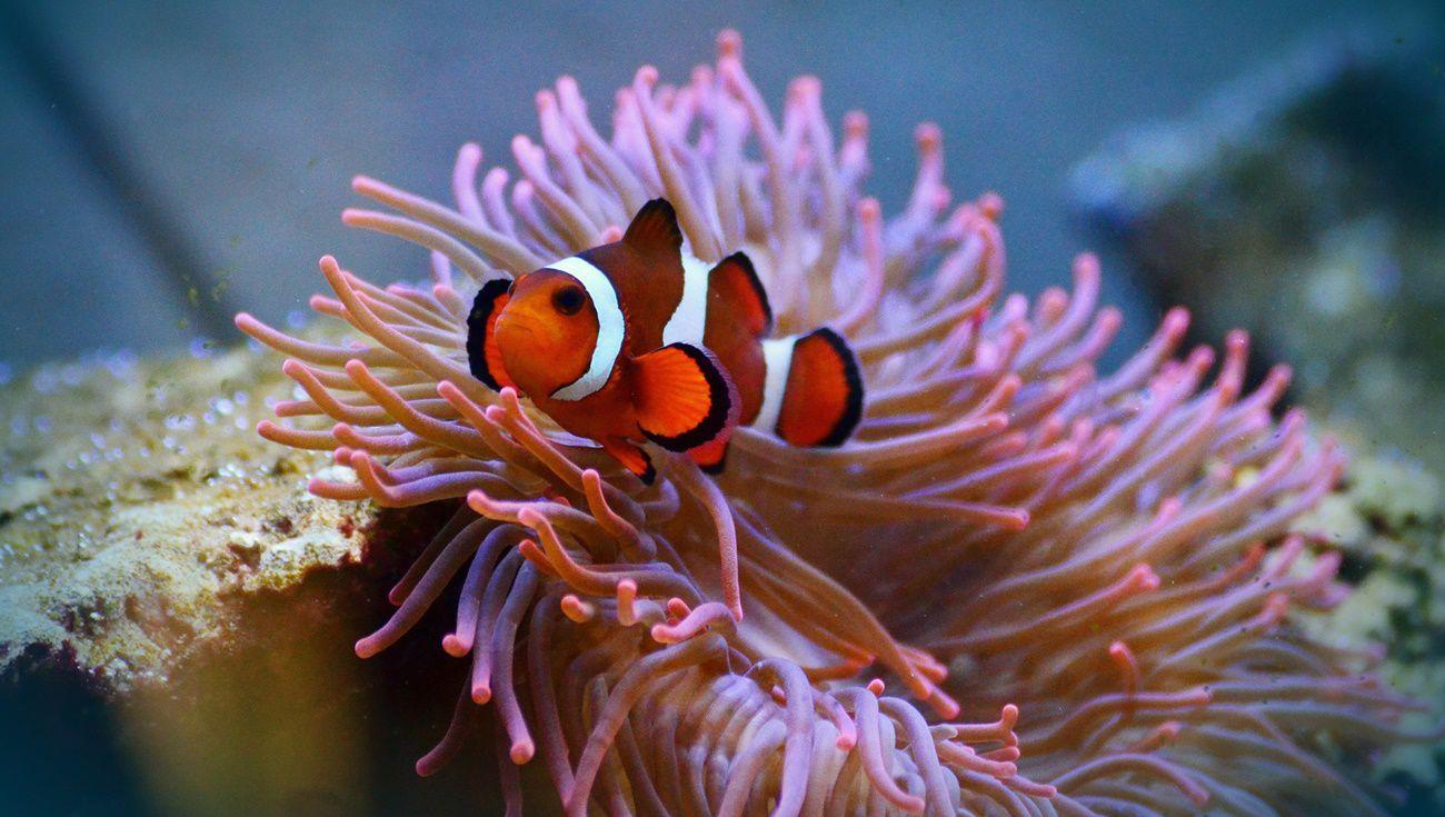 水族養熱帶魚