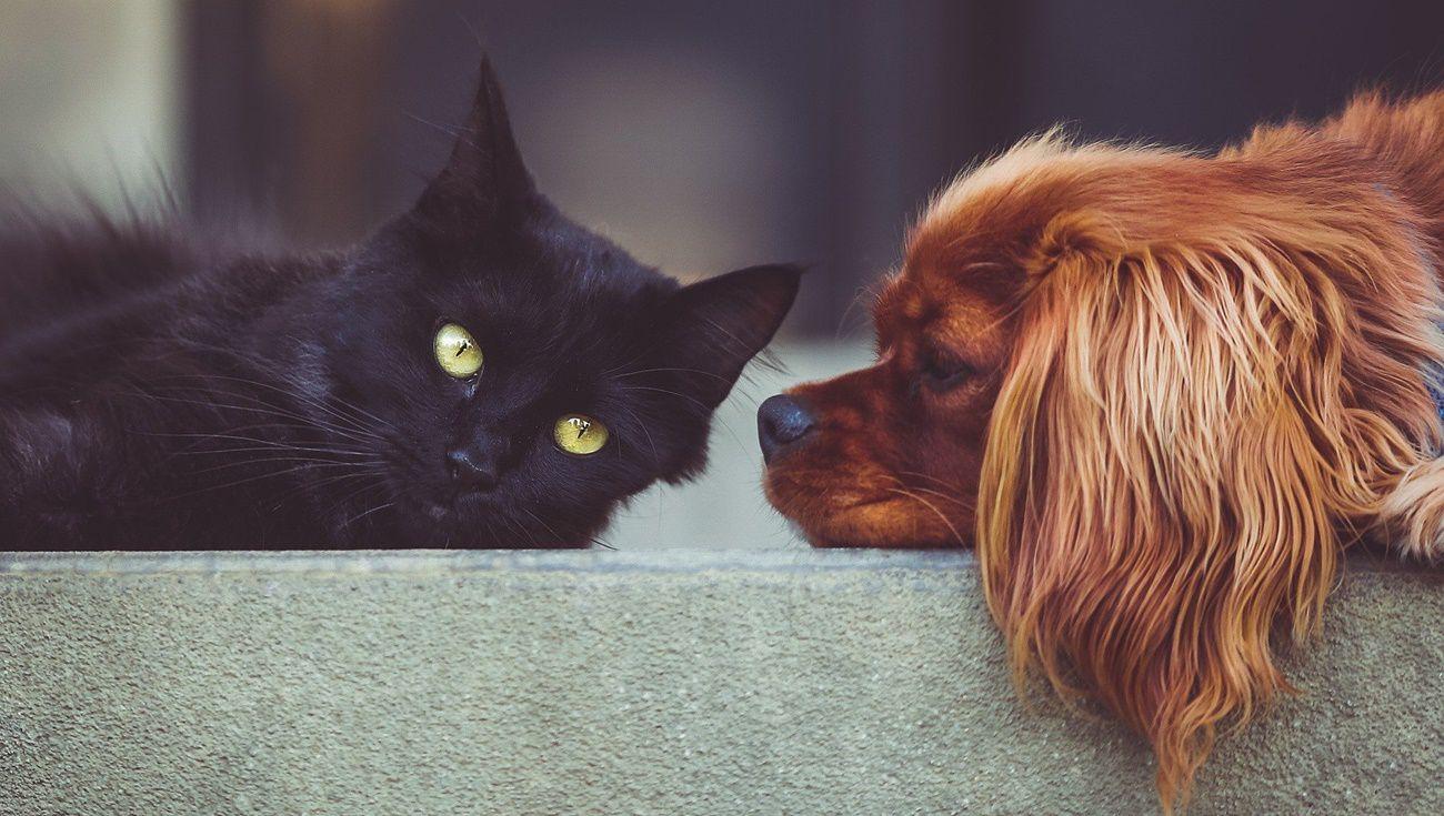 貓咪跟狗狗