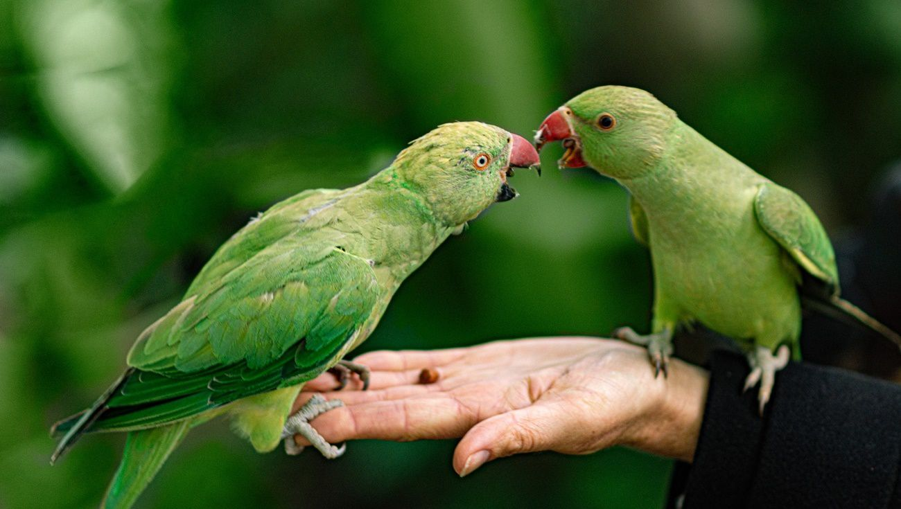 寵物鳥訓練