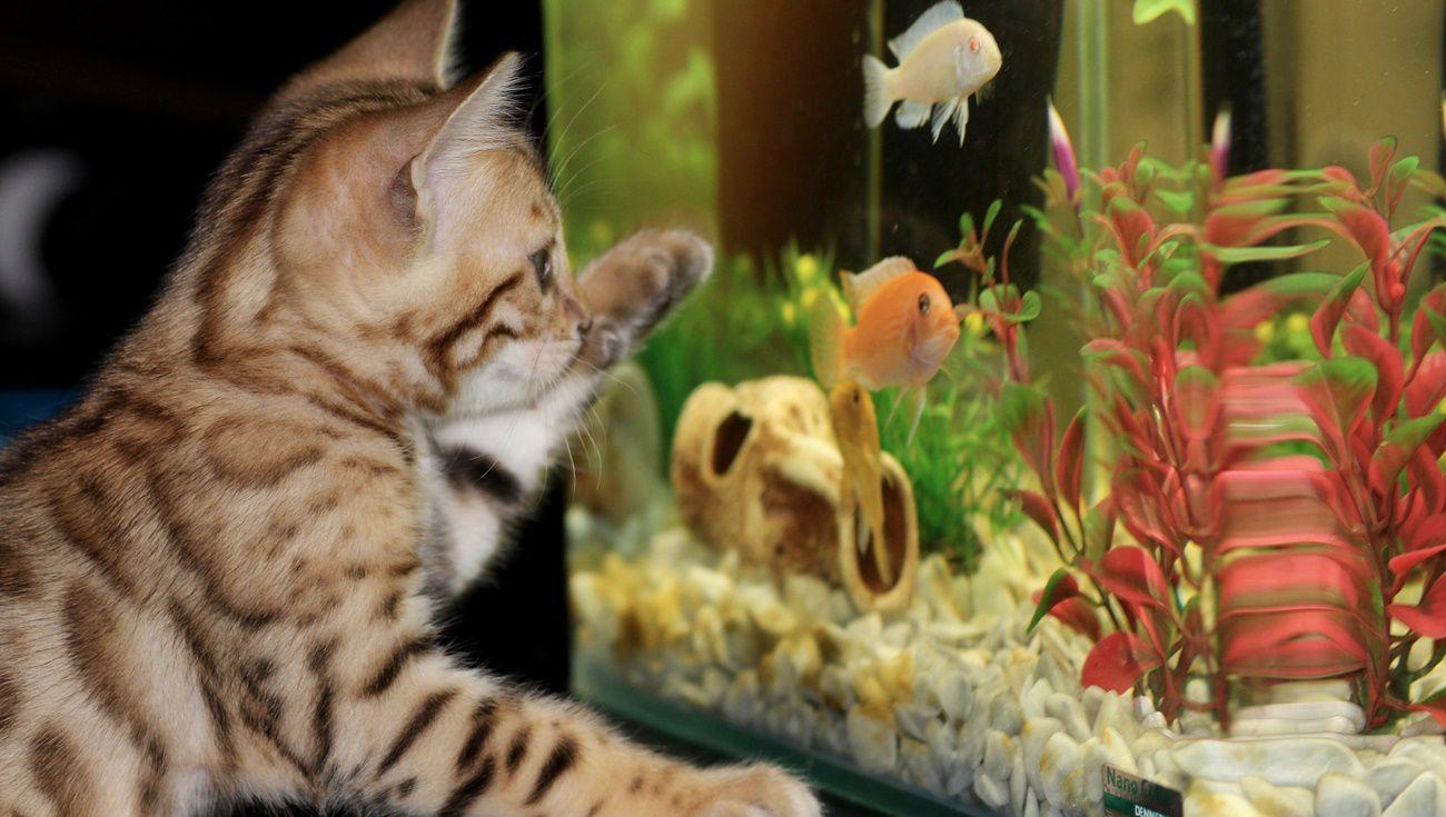 新手養魚注意事項