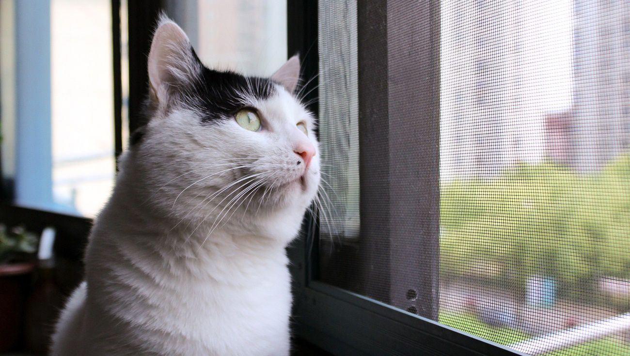 養貓注意事項