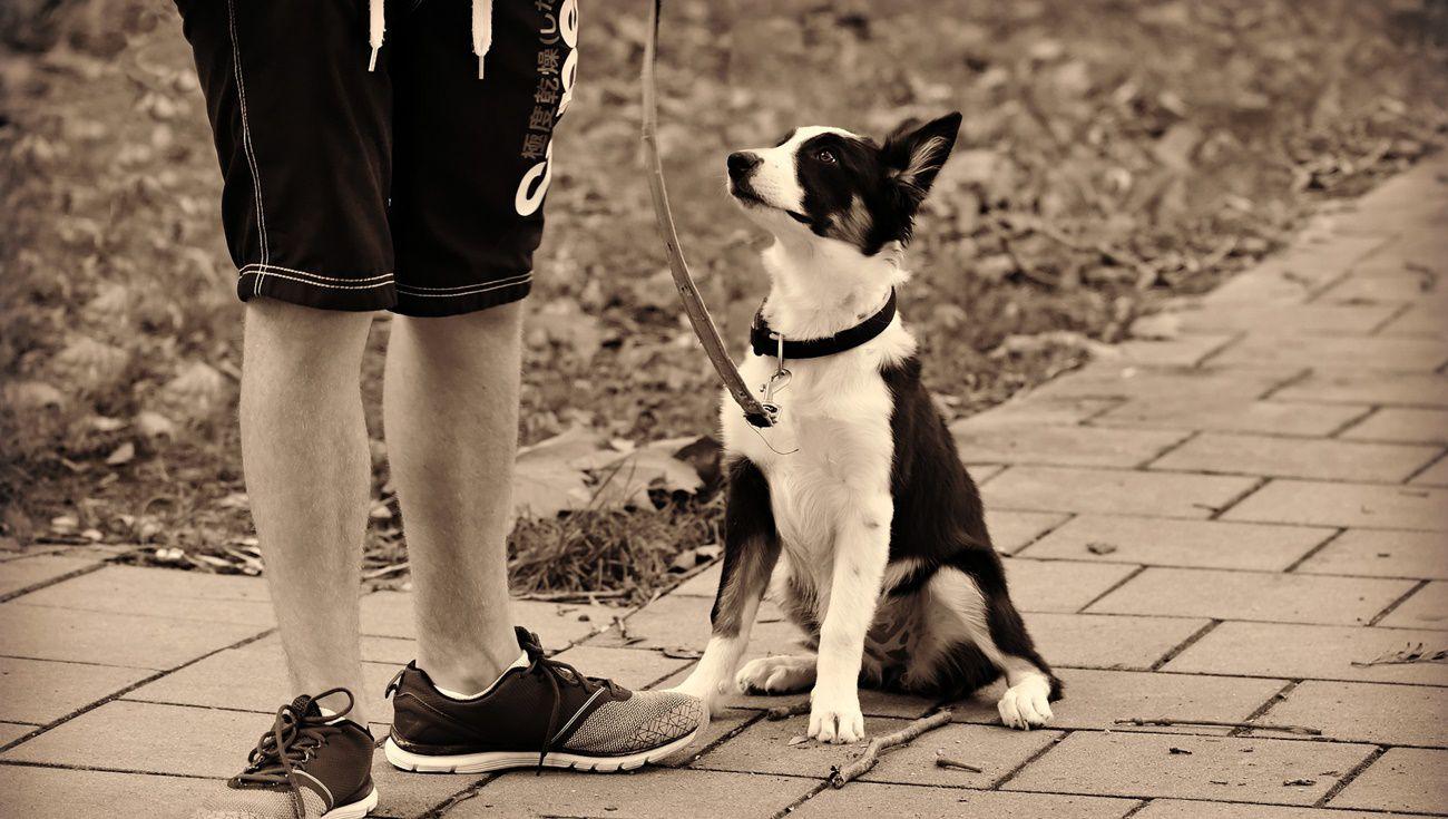 養狗注意事項