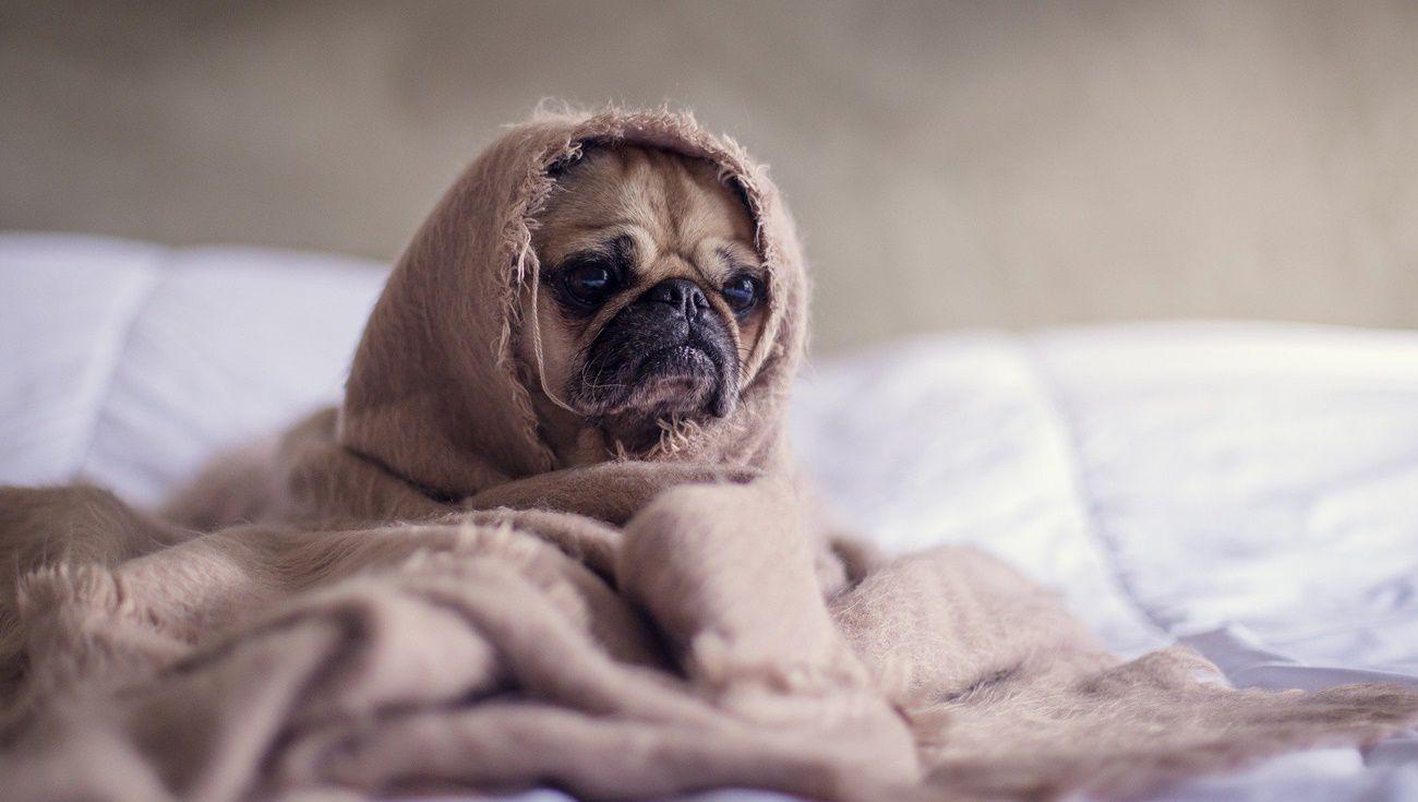 狗狗分離焦慮