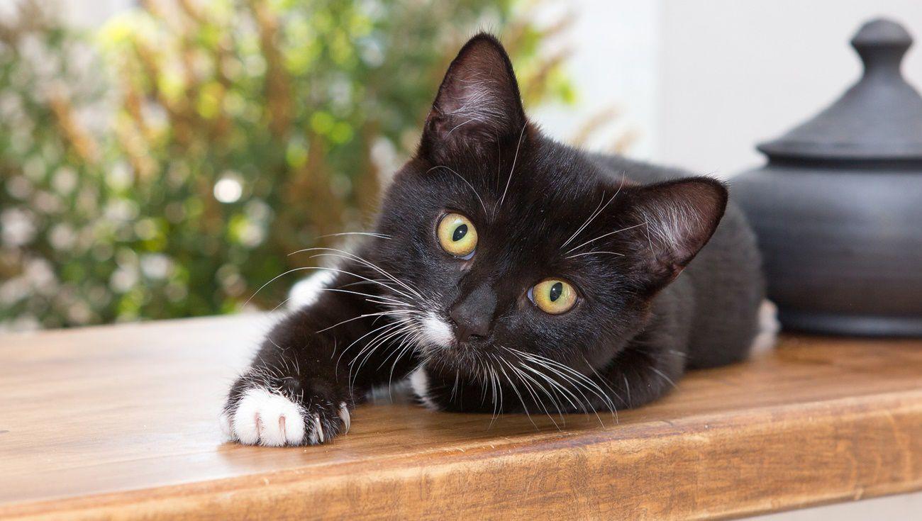 飼養貓咪注意事項