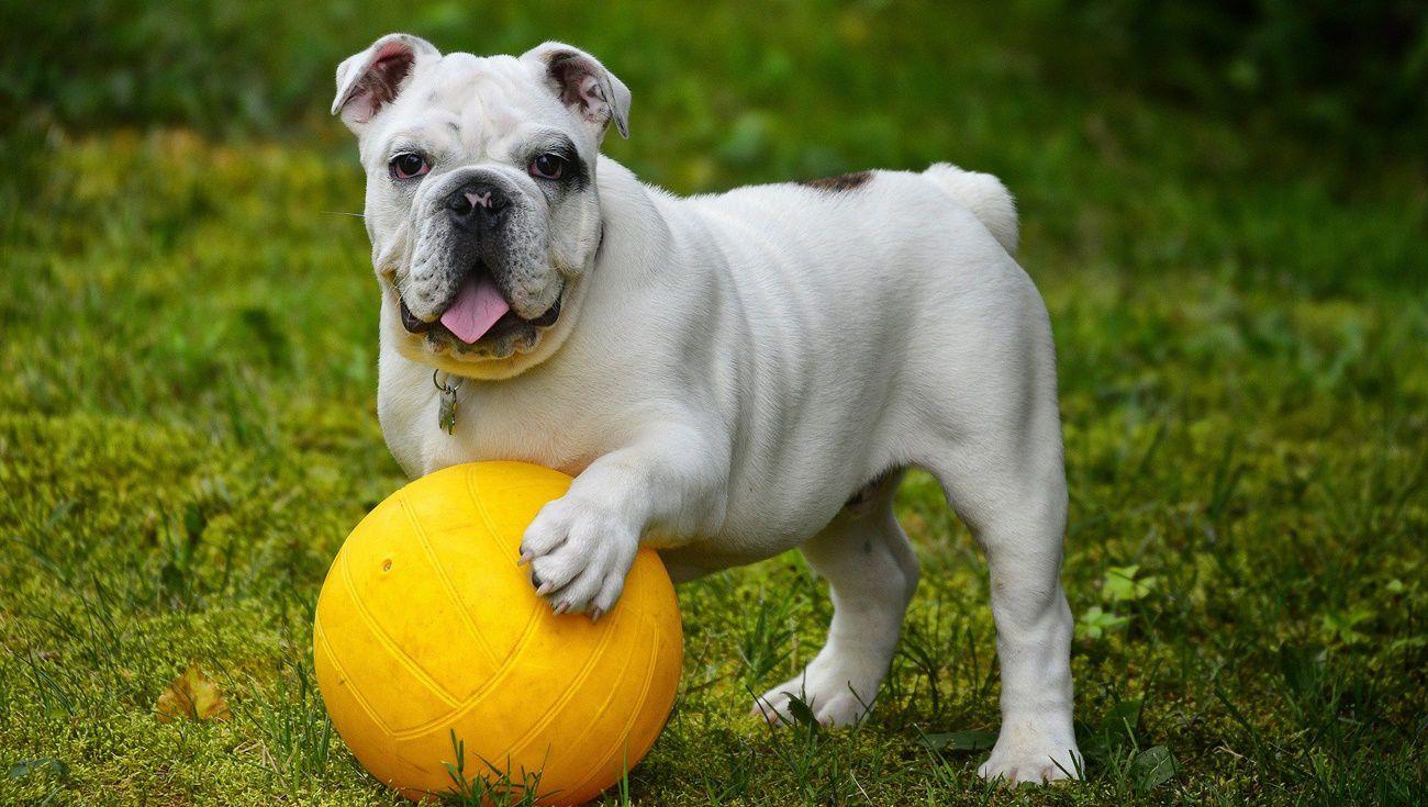 幫狗狗減肥