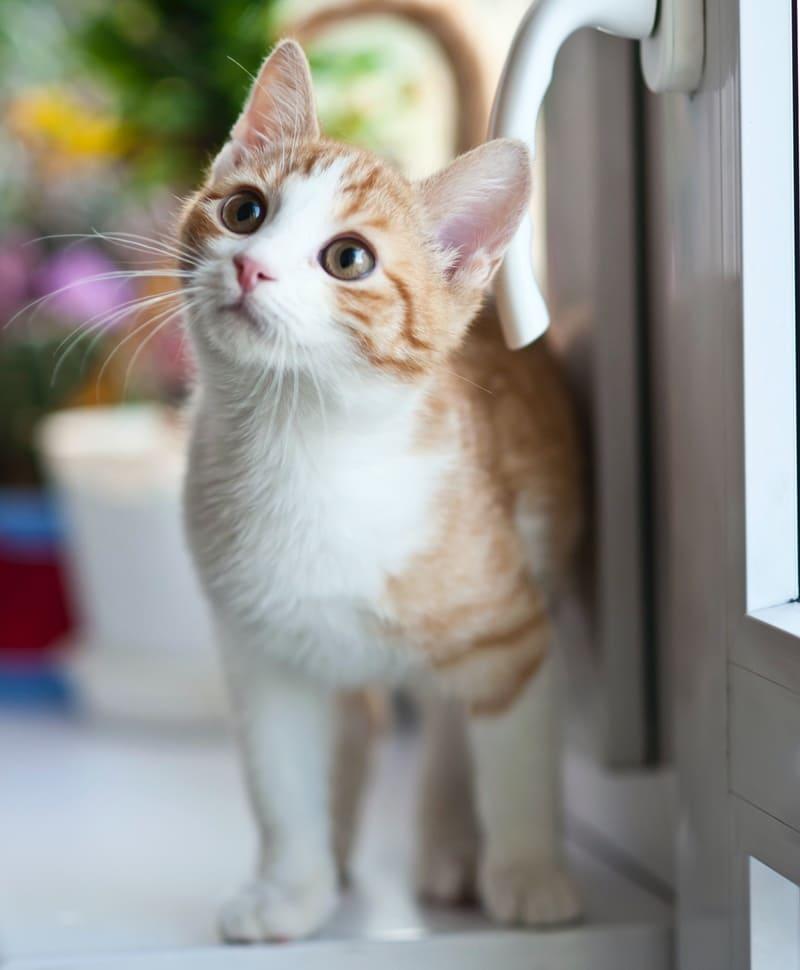 養貓須知文章